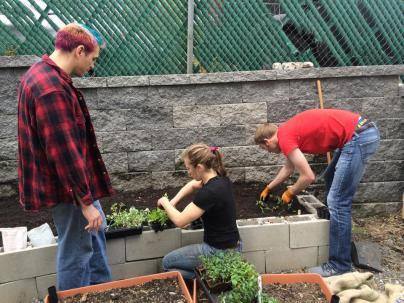 Back Yard Beds Planting 2